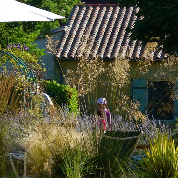 Stipa tenuissima and Stipa gigantea catch the sun by the pool. Garden designed by Carolyn Grohmann