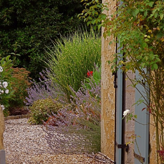 Planting at the side of the house. Garden designed by Carolyn Grohmann