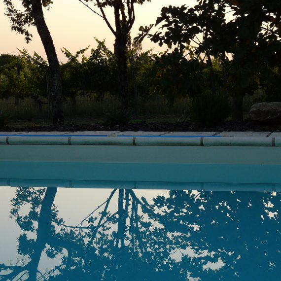 Fig tree reflections in the pool