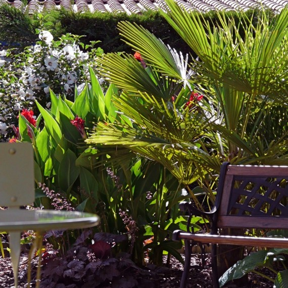 Lush planting including Trachycarpus and Canna lilies. Garden designed by Carolyn Grohmann