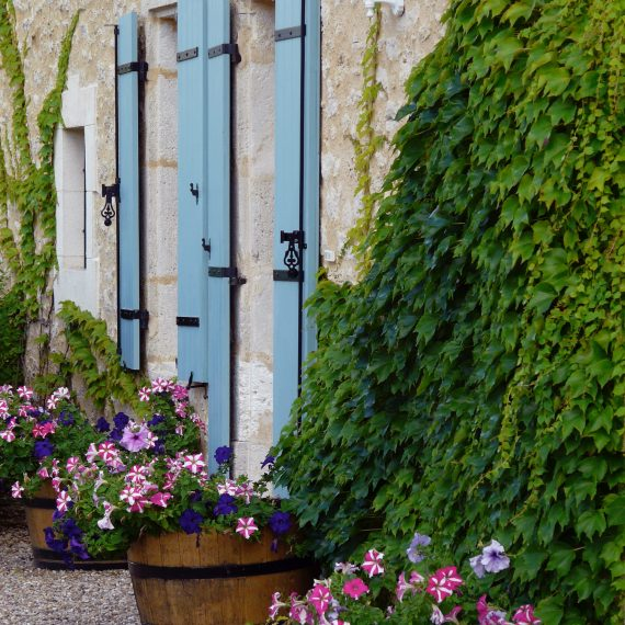 Pots of annuals and Virginia Creeper at the front of the house. Garden designed by Carolyn Grohmann