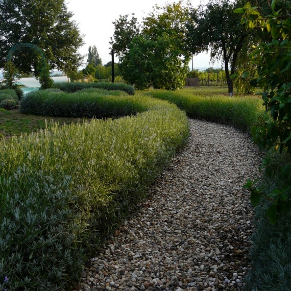 Lavender hedge leading to the pool. Garden designed by Carolyn Grohmann