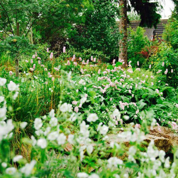 Geranium White Ness, garden designed by Carolyn Grohmann