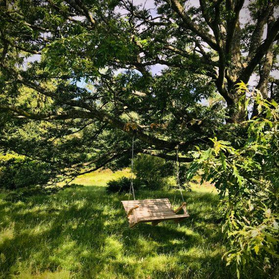 Swing seat hanging from a nearby oak tree. Garden designed by Carolyn Grohmann