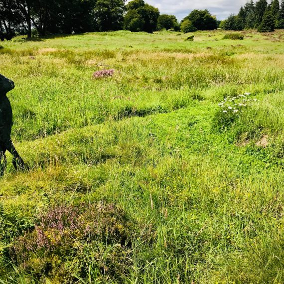 Mown paths with Stanley Dove (sculptor) hare. Garden design by Carolyn Grohmann