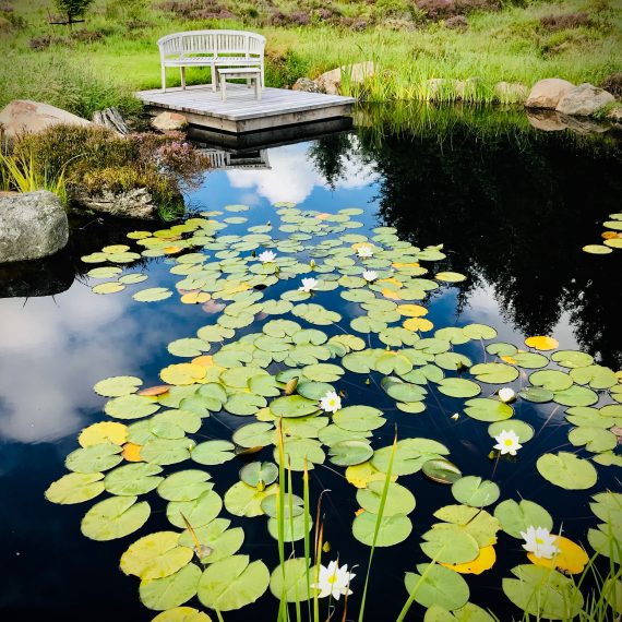 Wildlife pond with water lilies, flag iris and locally sourced boulders. Designed by Carolyn Grohmann