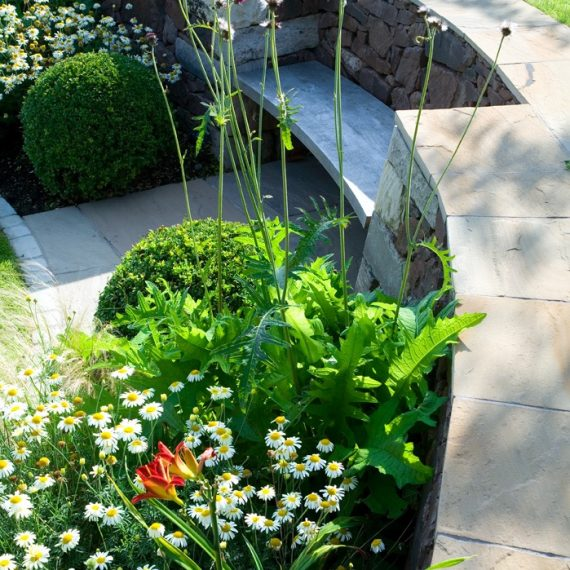 Box balls and Day Lilies, planting design by Carolyn Grohmann