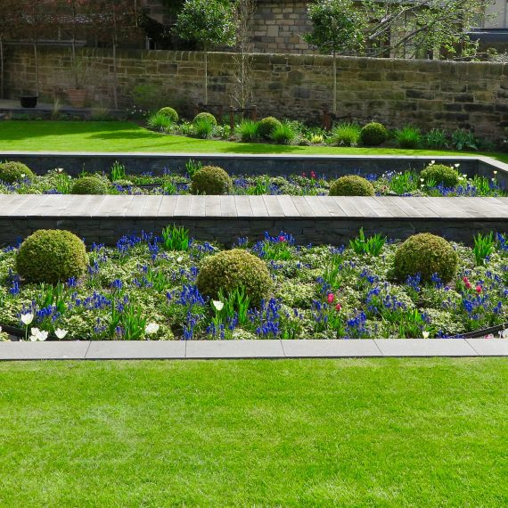 Spring in the sunken garden with grape hyacinths and tulips. Designed by Carolyn Grohmann