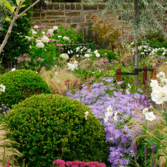 Front garden, clipped box balls, herbaceous planting, designed by Carolyn Grohmann