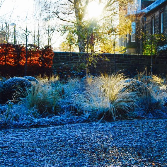 Merchiston Garden, winter, designed by Carolyn Grohmann