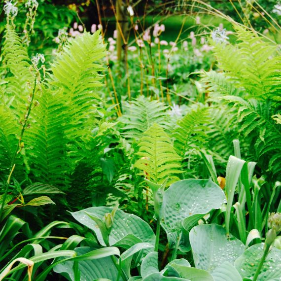 Ferns and Hostas, designed by Carolyn Grohmann