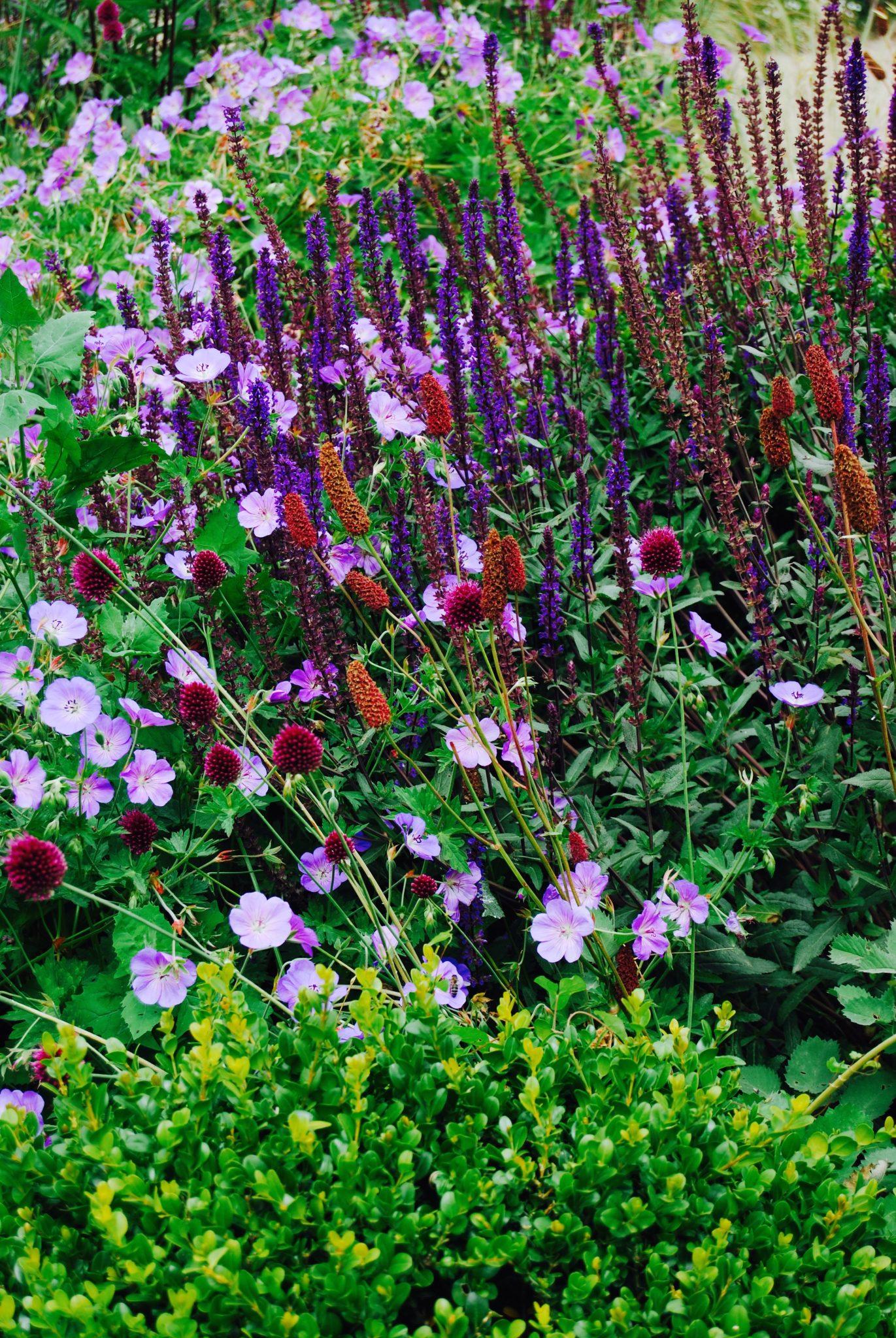 Garden Design - Secret Gardens | Jersey Garden